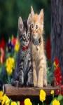 cat Lovely Wallpapers HD1 screenshot 2/6