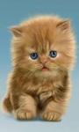cat Lovely Wallpapers HD1 screenshot 5/6