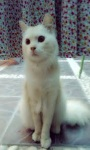 cat Lovely Wallpapers HD1 screenshot 6/6