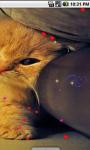 Cute Kitty cat Live Wallpaper screenshot 3/4