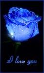 Dew Blue Rose Live Wallpaper screenshot 1/3