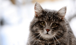 Awesome Cat Wallpapers HD screenshot 1/4