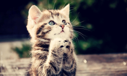 Awesome Cat Wallpapers HD screenshot 2/4