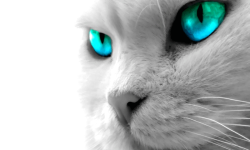 Awesome Cat Wallpapers HD screenshot 3/4