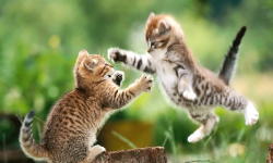 Awesome Cat Wallpapers HD screenshot 4/4