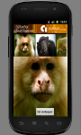 Funny Monkey Wallpapers screenshot 2/3