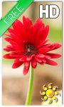 Gerbera Flower LWP screenshot 1/2
