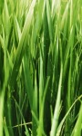 Grass Screen Live Wallpaper screenshot 3/3