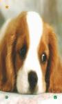Dog Wallpapers HD screenshot 2/6