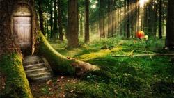 Beautiful Forest Wallpapers screenshot 4/5
