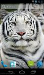 Best White Tiger Wallpaper HD screenshot 1/3