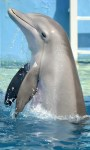 Dolphin Tale 2 HD Wallpaper screenshot 4/6