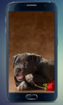 Amazing Puppies Live Wallpaper screenshot 1/3