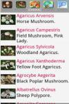 Cerca Funghi source screenshot 4/6
