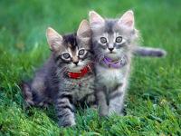 Funny Cute Cats Wallpaper in HD 2014 screenshot 2/6
