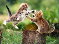 Funny Cute Cats Wallpaper in HD 2014 screenshot 3/6