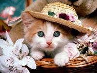 Funny Cute Cats Wallpaper in HD 2014 screenshot 4/6
