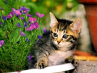 Funny Cute Cats Wallpaper in HD 2014 screenshot 6/6