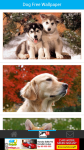 Fee Dog Wallpaper screenshot 2/6