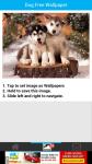 Fee Dog Wallpaper screenshot 3/6