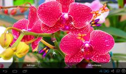 3D Orchid flower Live Wallpaper screenshot 2/5