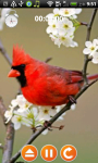 Ringtones and Sounds-Birds screenshot 5/5