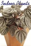 Indoor Plants screenshot 1/2
