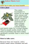 Indoor Plants screenshot 2/2
