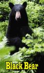 Black Bear Lite screenshot 1/3