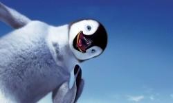 Funny Penguin Wallpaper Android screenshot 1/3