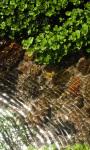 Clear Pond Live Wallpaper screenshot 1/3