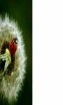 Pretty dandelion macro Wallpaper HD screenshot 1/3