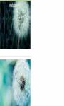 Pretty dandelion macro Wallpaper HD screenshot 2/3