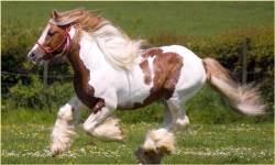 1000 Horse Wallpapers screenshot 1/3