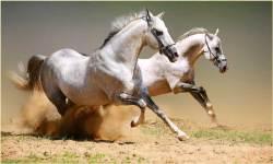 1000 Horse Wallpapers screenshot 2/3