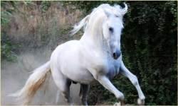 1000 Horse Wallpapers screenshot 3/3