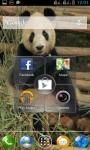 PANDA EATING AT ZOO LWP screenshot 3/3
