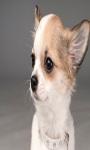 Cute Dogs With Cute Face Wallpaper screenshot 3/3