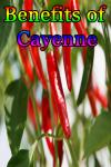 Benefits of Cayenne screenshot 1/3