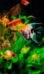 Colorful Fishes LWP screenshot 2/3