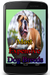 Most Expensive Dog Breeds screenshot 1/3