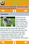 Most Expensive Dog Breeds screenshot 3/3