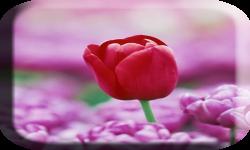 Pink flower wallpaper  pic screenshot 3/4