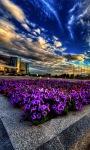 Flower City Live Wallpaper screenshot 2/3