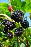 Benefits of Blackberry screenshot 2/4