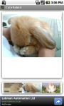 Cute Rabbit screenshot 3/3
