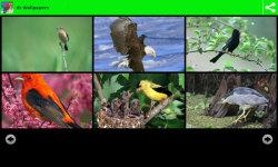 Beauty Birds Wallpapers  screenshot 1/6