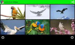 Beauty Birds Wallpapers  screenshot 3/6