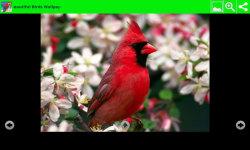 Beauty Birds Wallpapers  screenshot 4/6