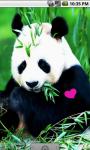 Real Panda Live Wallpaper screenshot 1/4